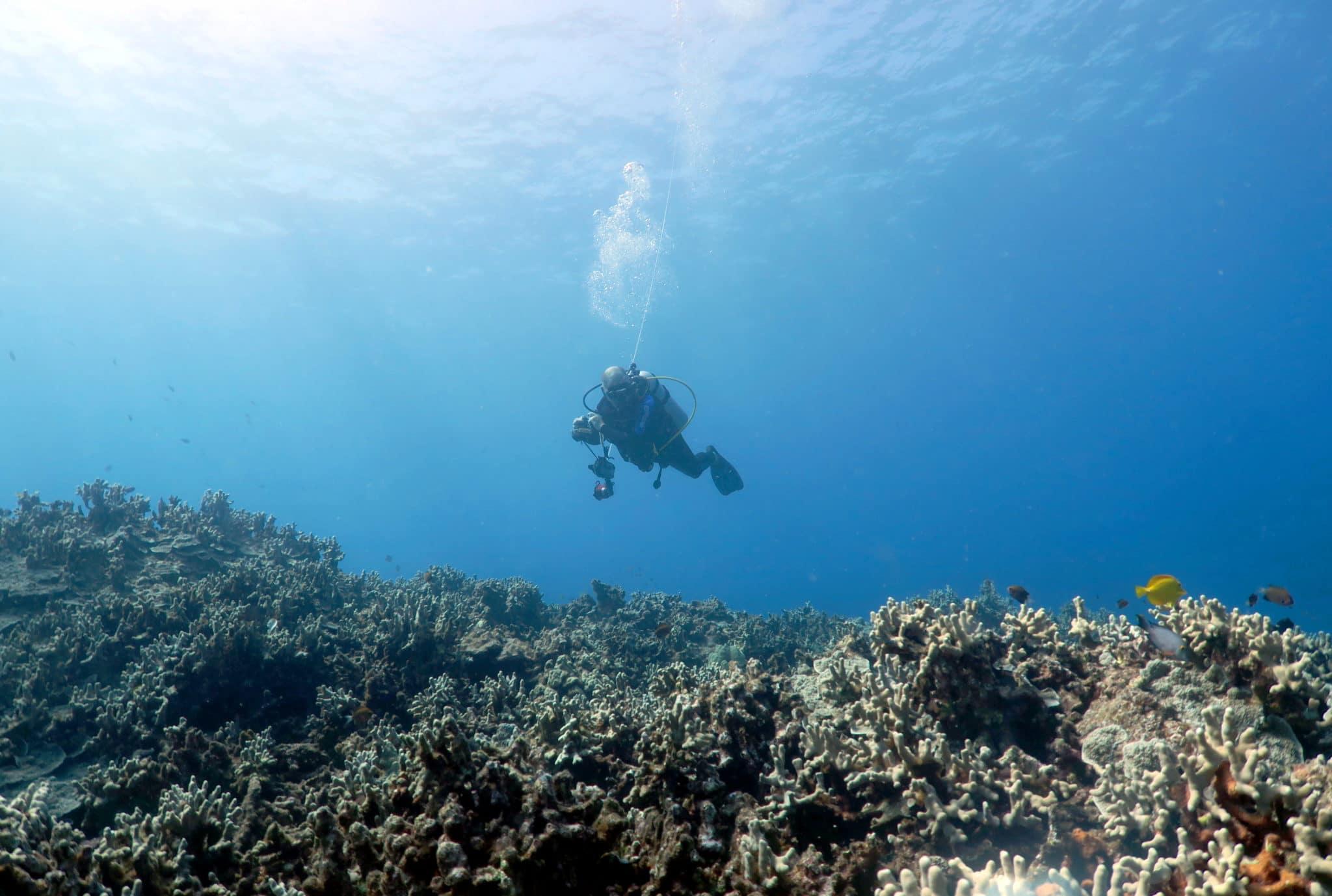 Cours de plongée hawaii
